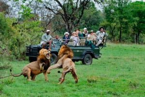 Kruger Safari Guides 2020